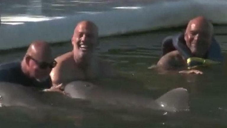 Veterans Dealing With PTSD Swim With Dolphins in Florida