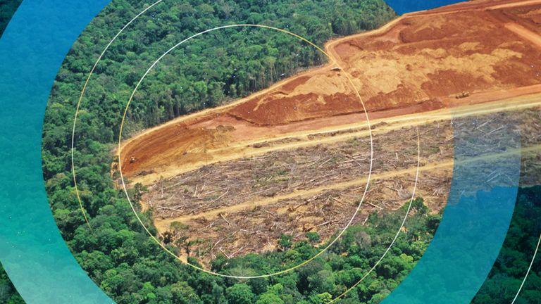 Deforestation. Pic: iStock