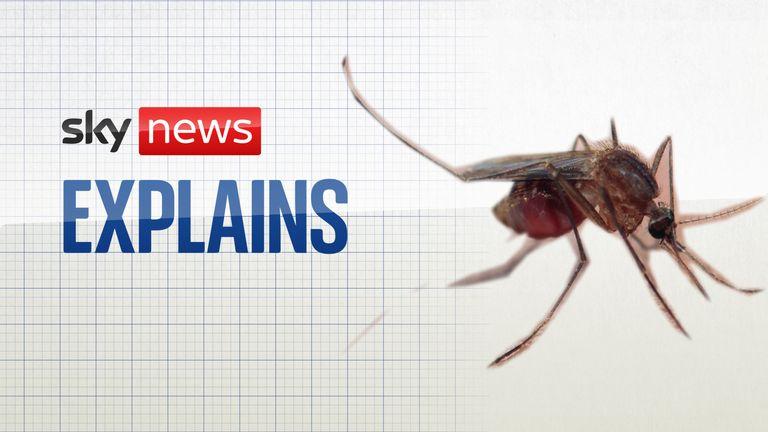 Sky News Explains: The Malaria Vaccine