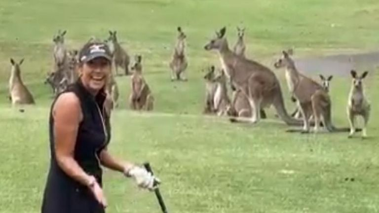 Amateur Australian golfer Wendy Powick faced an unusual hazard while teeing off at Arundel Hills on the Gold Coast.