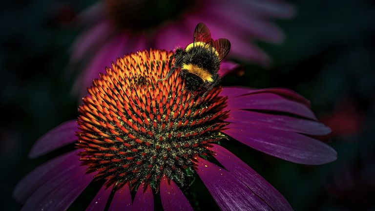 Undated handout photo issued by the National Geographic of a bumblebee on a flower at Wisley Gardens in Surrey. The image, taken by Dimitrios Zacharopoulos, was the runner-up in the wildlife category at the National Geographic Traveller (UK) Photography Competition 2021. Issue date: Tuesday October 5, 2021.