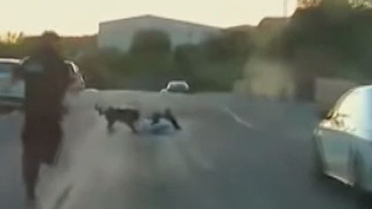 Police dog finally catches dangerous driver after high-speed chase