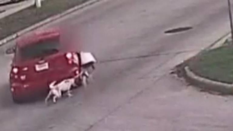 A woman was robbed of her purse at gunpoint and dragged down a street with her dog in Houston, Texas.