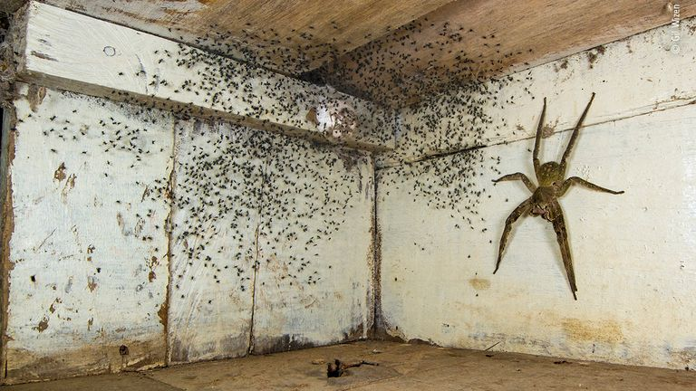 The Spider Room has been named the winner in the urban wildlife category of the Wildlife Photographer Of The Year 2021 competition. Pic: Gil Wizen/ Wildlife Photographer Of The Year